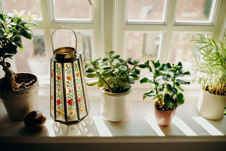 Plants on sunlit window