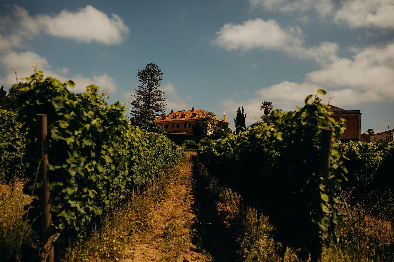 Portugal Vineyard wedding