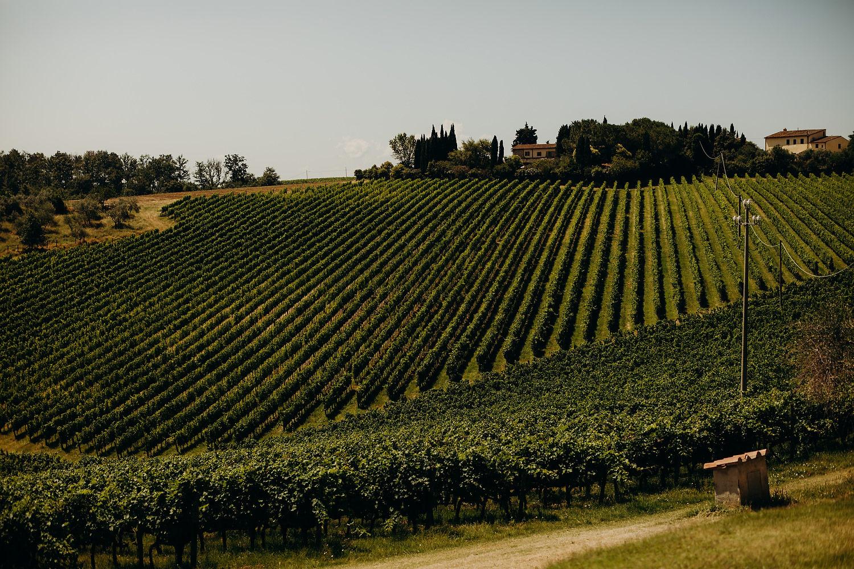 Vineyard at Fattoria La Loggia