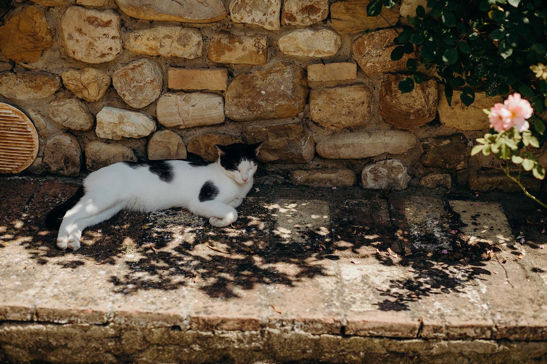 cat sleeps in the shade